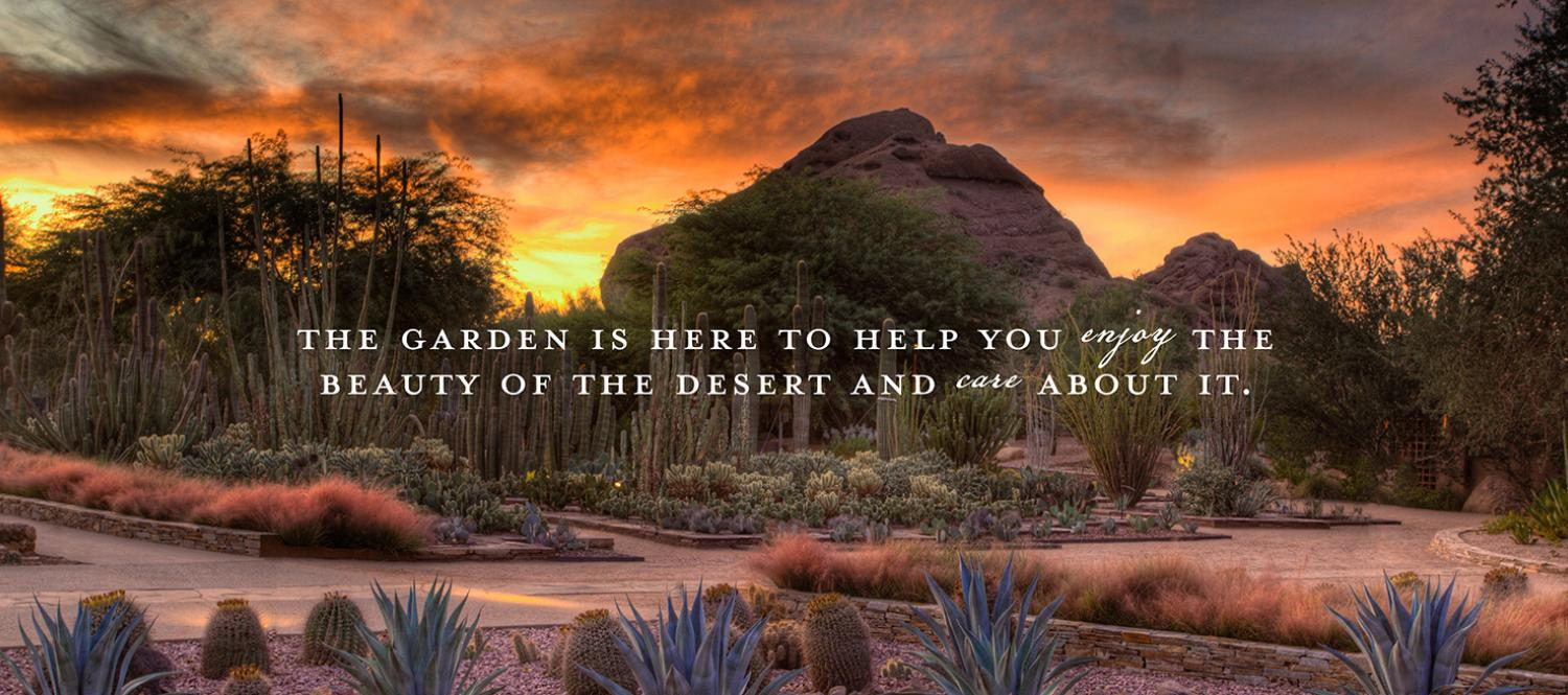 Desert botanical garden - This Event Has Been Cancelled Due To Not Meeting Minimum Participation Requirements